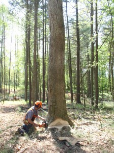 Cover photo for Cutting at Financial Maturity: Maximizing the Economic Return of Your Woodland